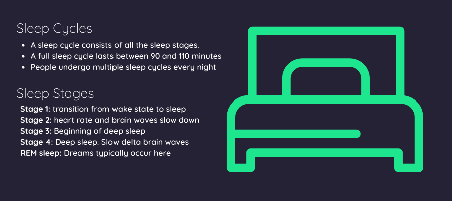 sleep cycles and sleep stages banner